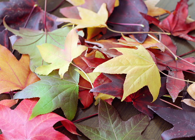 diy-autumnleafart-1