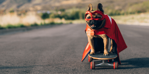 french bulldog riding a skateboard