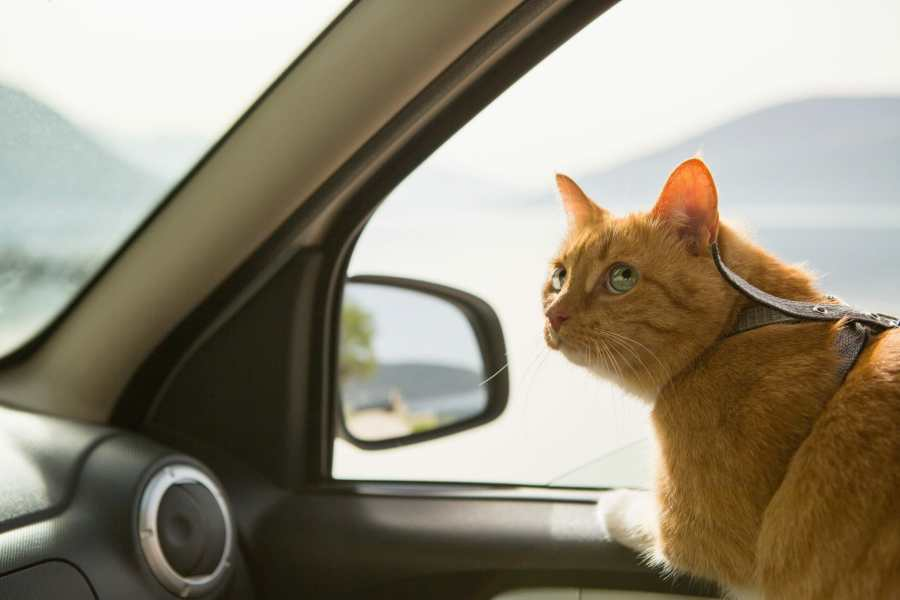 How to Sedate a Cat for Travel