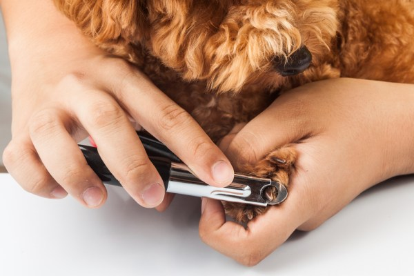 dog nails being cut and trimmed
