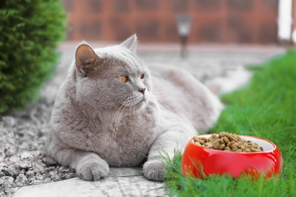 overweight cat lying near bowl of food