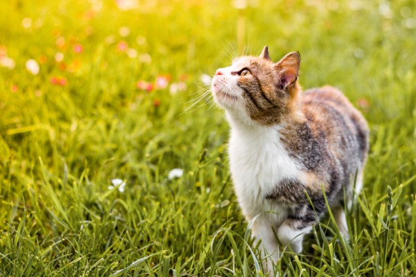 cat playing outside in fresh green grass