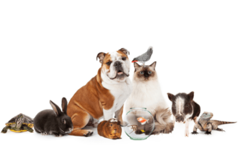 reptiles, bunnies, pigs, dogs and cats in a group photo