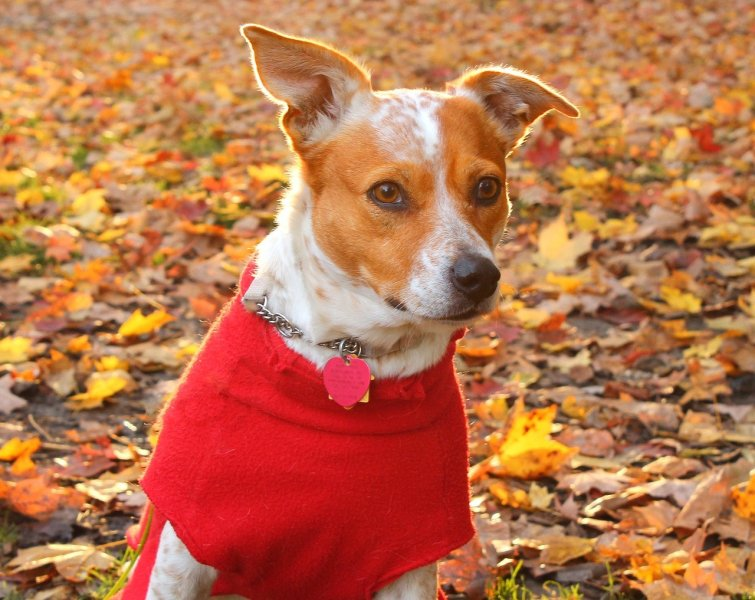 calming treats for dogs featured image