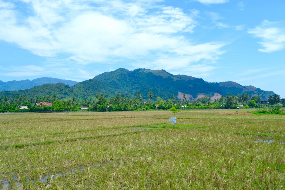 Rice Paddy Banda Aceh | Hello Raya Blog