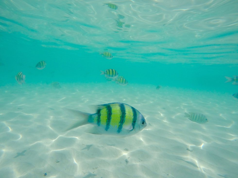 Snorkelling Koh Dam Hok   Sailing Holidays   Hello Raya Blog