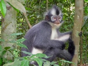 Monkey Bukit Lawang | Places to Visit in Indonesia | Hello Raya Blog