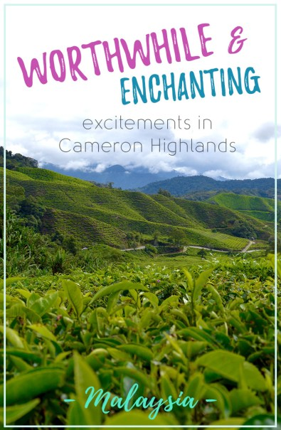 Worthwhile & Enchanting Excitements in Cameron Highlands, Malaysia | Hello Raya Blog