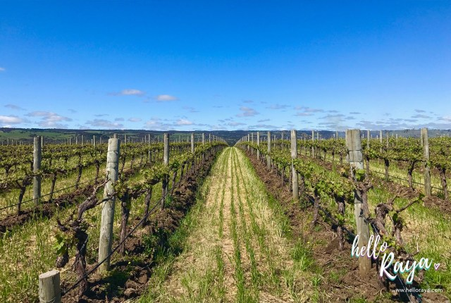 Must Visit Wineries in McLaren Vale | Hello Raya Blog