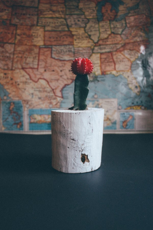 Wood Succulent Holder 5