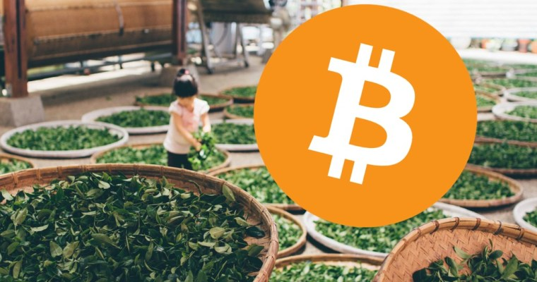 Bitcoin Loves Tea