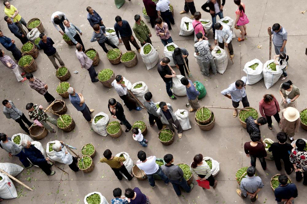 Brewing Success: Global Tea Sales Increasing in 2015