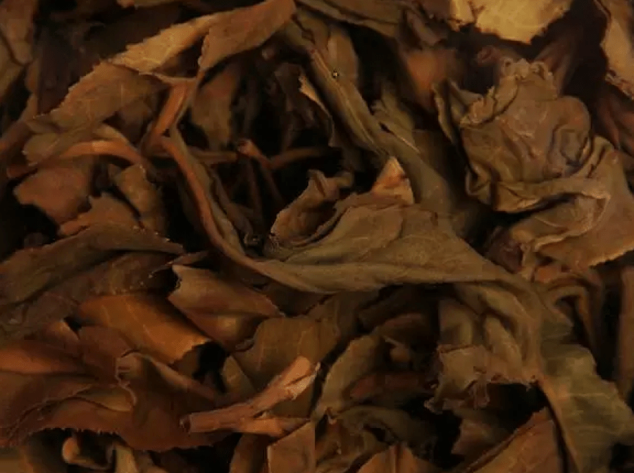 Brewed leaves of vintage raw pu erh with standard storage environment