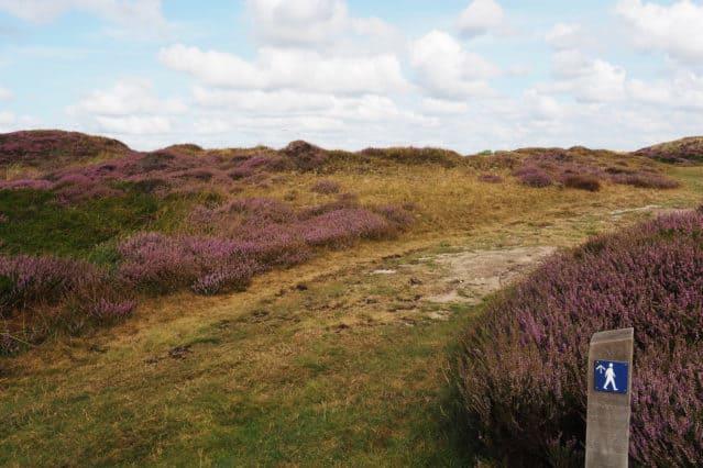 Wandelen route natuur Dennen Texel