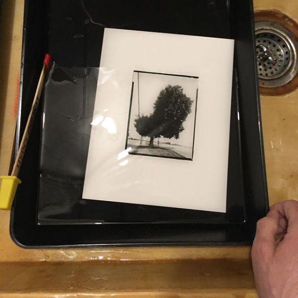 Printing Tree, Green Street