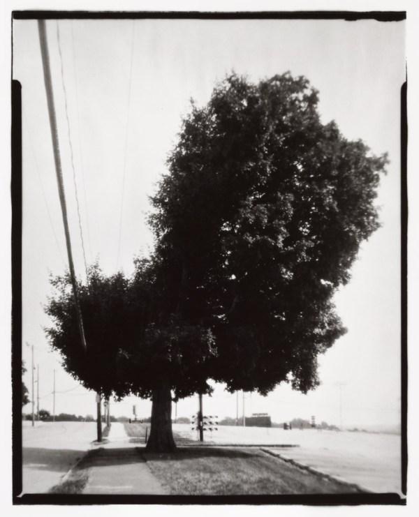 Tree, Green Street
