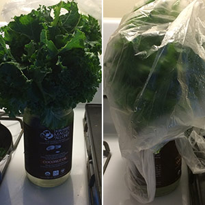 Best way to store kale