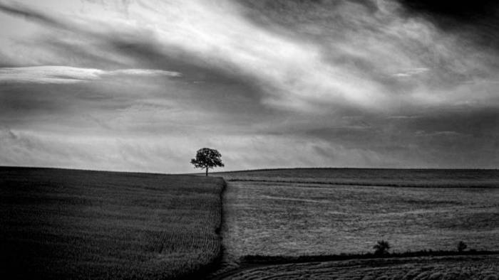 Tree at an intersection of fields