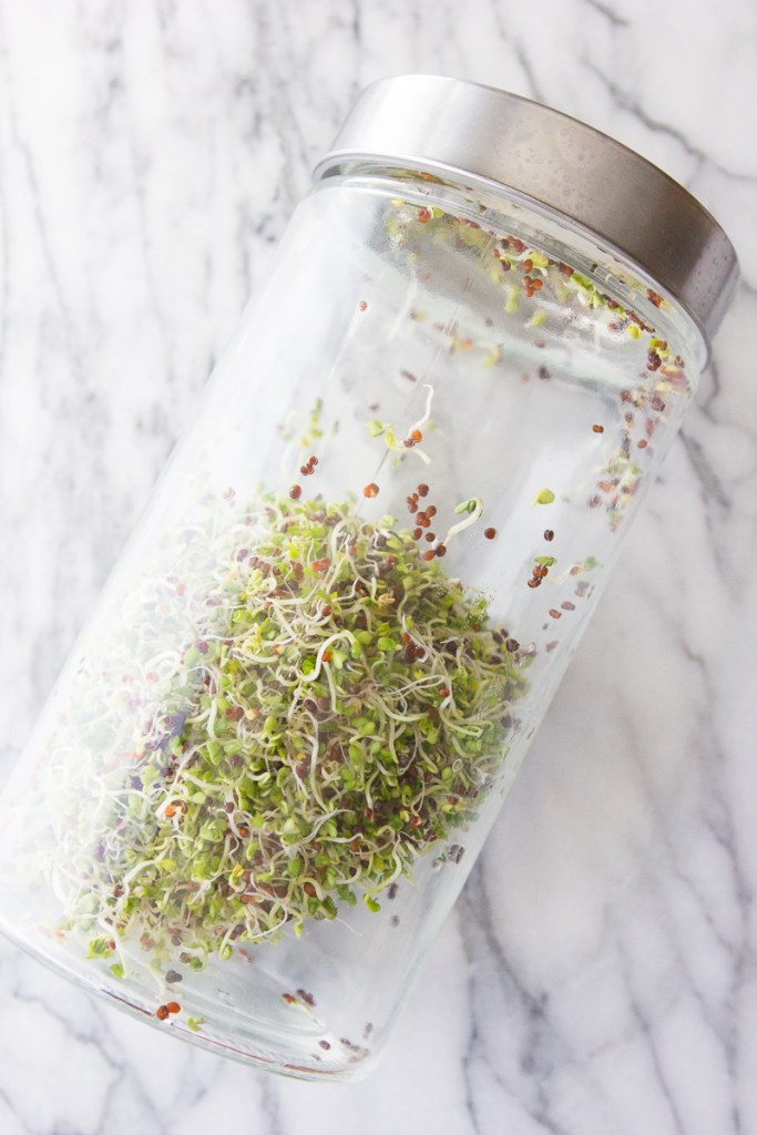 A Beginner's Guide to Growing Your Own Sprouts