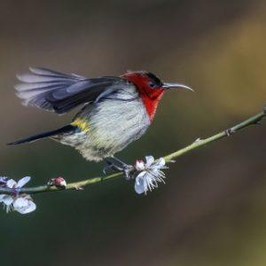 Group logo of Birdwatching