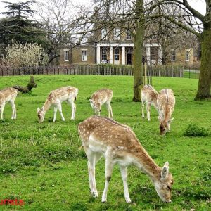 London kostenlos clissols park Rehe