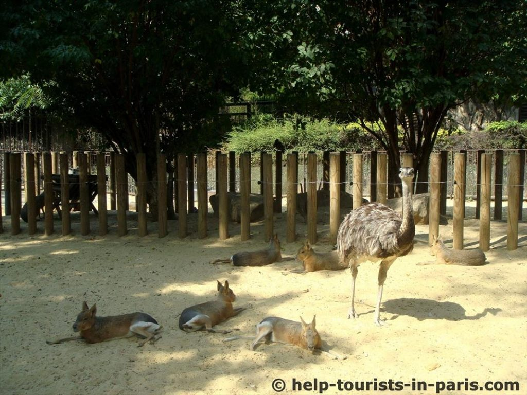 Tiere im Zoo in Paris