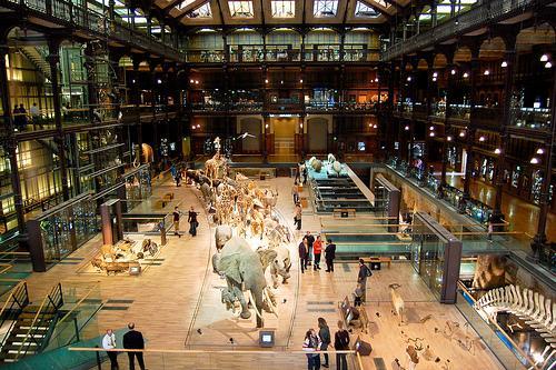 Grande Galerie de l'Evoluton in Paris