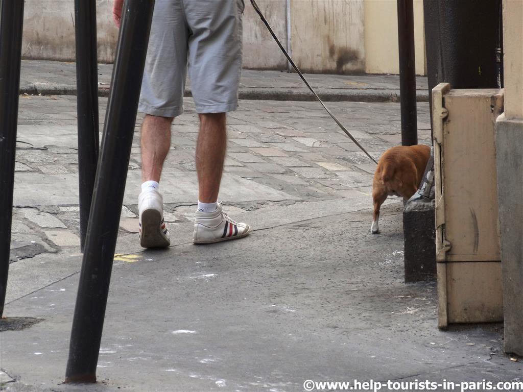 Urlaub mit Hund in Paris