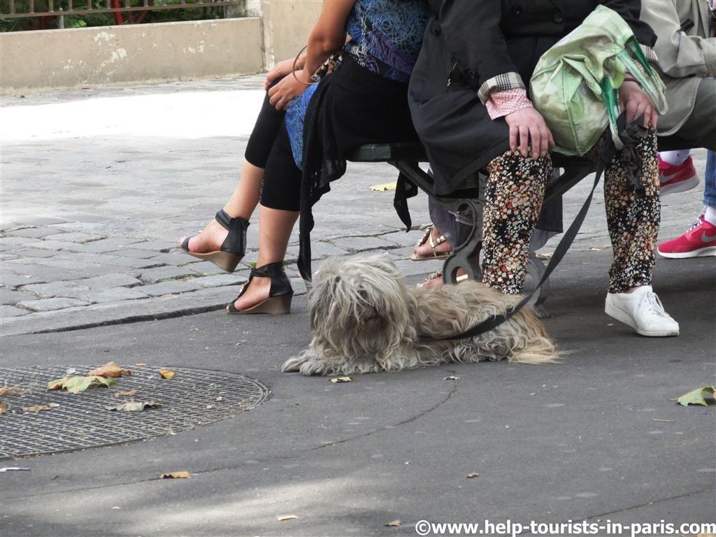 Mit Hund in Paris urlauben