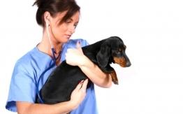 dogcare - dogcare