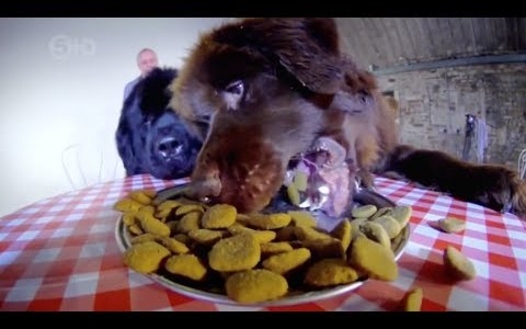 BARFWorld.com: The Truth About Your Dog's Food