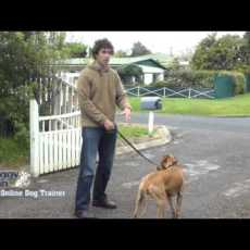 Training your dog to walk on the leash – The Online Dog Trainer