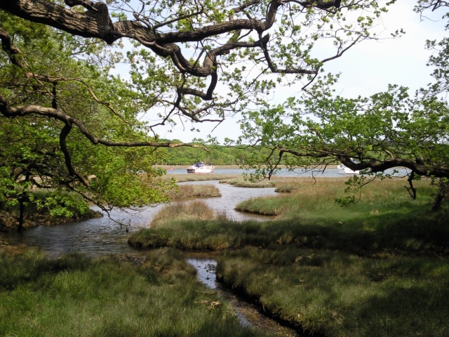 The Beaulieu River, glimpsed through trees