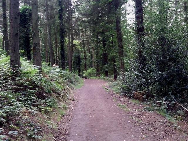 A broad earth path running through woodland