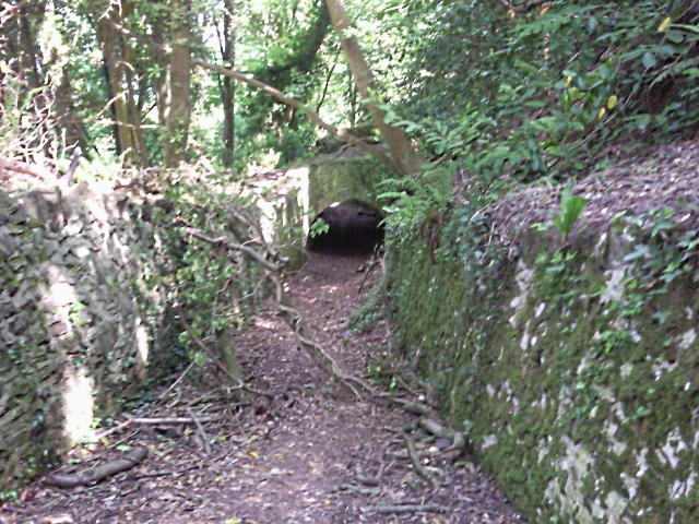 Tunnel / ditch in Yearnor Wood