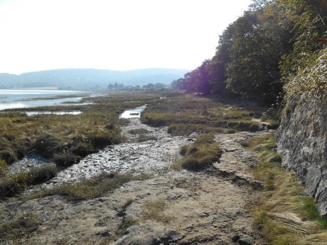 The marshy path