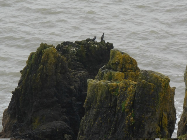 Two cormorants on a rock