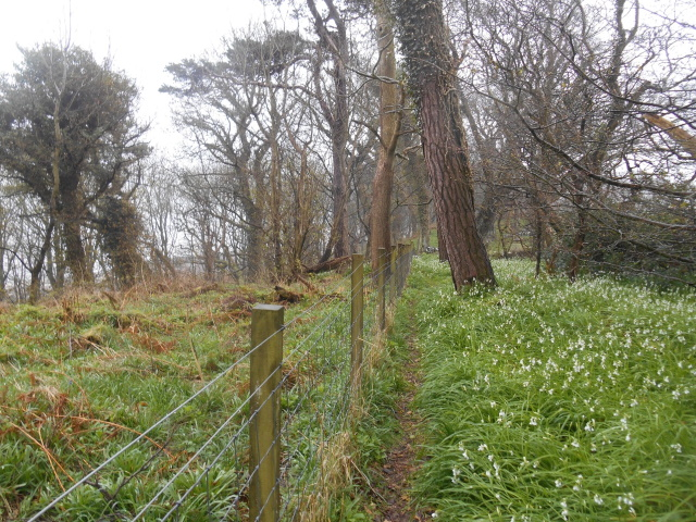 Snowdrops in the woods above Chapel Rossan Bay