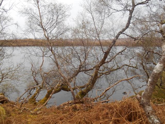 Loch na Fèithe Dìreich