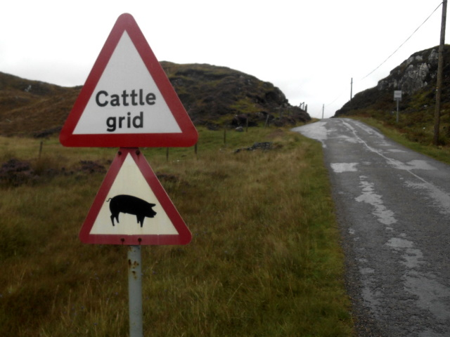 Two signs. Top sign: cattle grid. Bottom sign: picture of a pig.