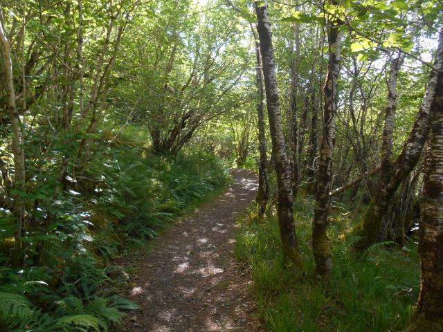 Sun-dappled woodland footpath