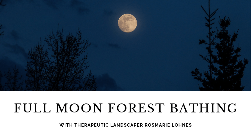 Full Moon Forest Bathing with Rosmarie Lohnes