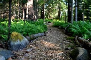 Contemplative woods trail