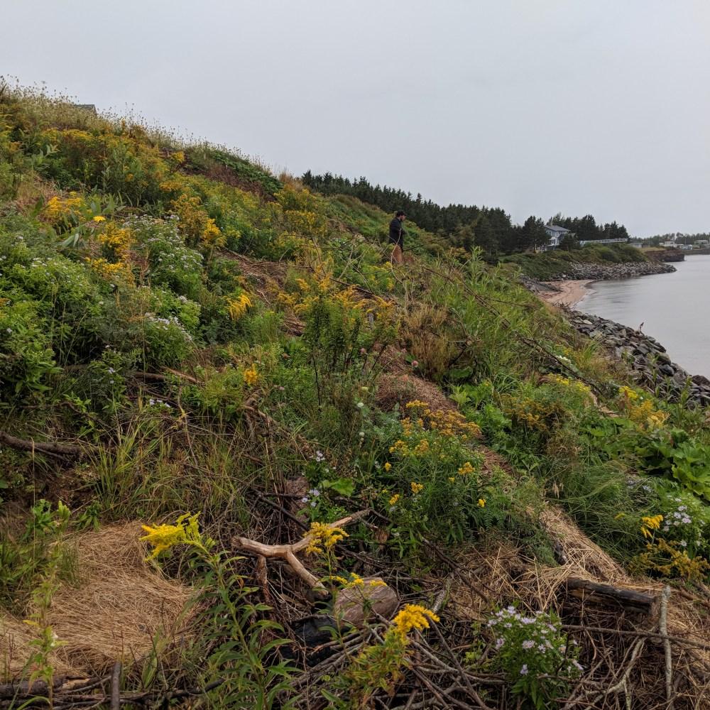 Living Shoreline Restorations