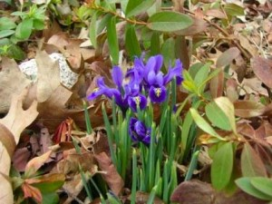 Golden Rules of Gardening – Working with Nature