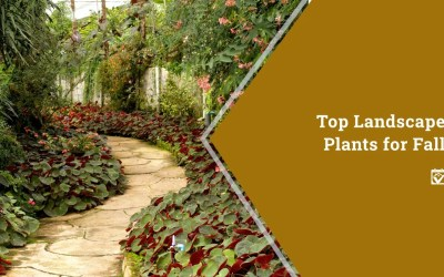 Top Landscape Plants for Fall