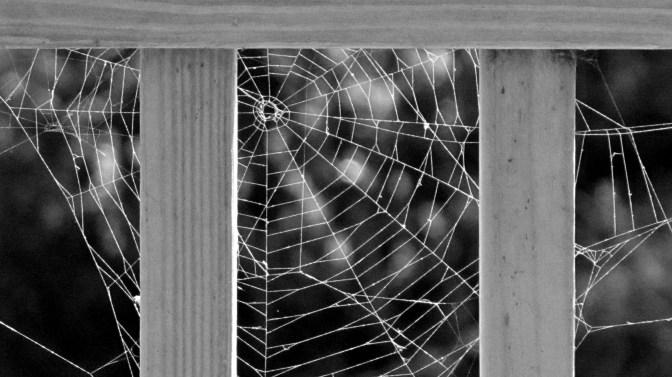 Local art by Arachnid