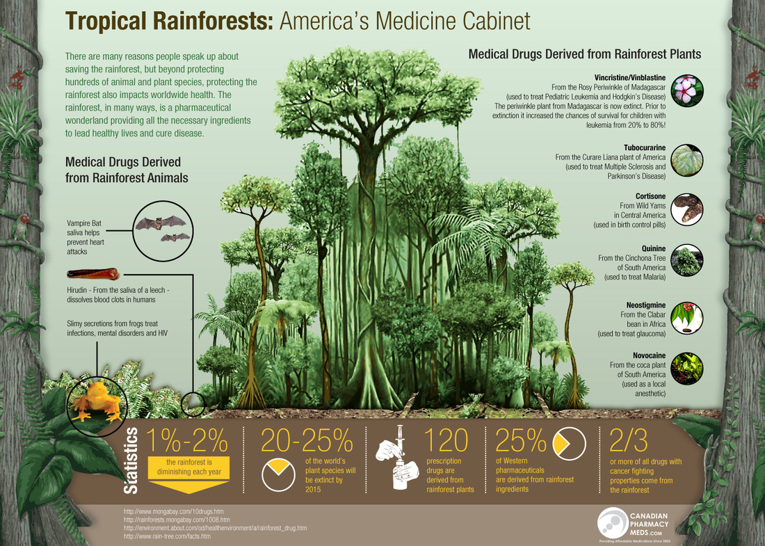 temperate forest food web diagram 480v single phase transformer wiring flora and fauna - tropical rainforests