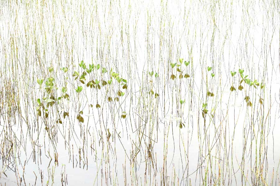 Inspirational marsh from the series Anarchy without adjectives by Jon Lanbroa