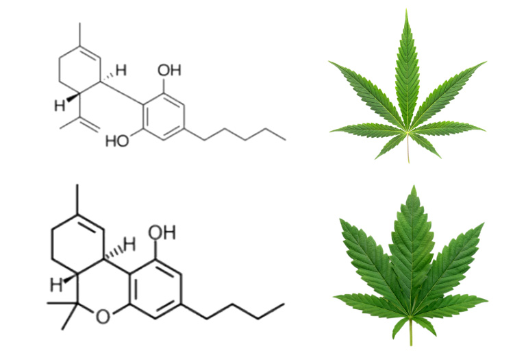 Hemp vs Marijuana: Chemical Structure